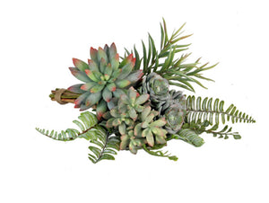 Succulent Bundle - Assorted
