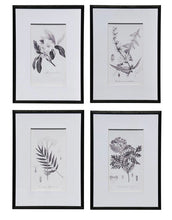 Load image into Gallery viewer, Botanical Black & White Print