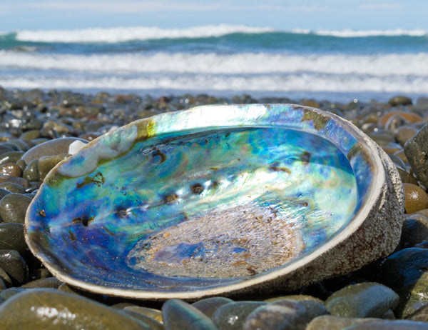 Glint Paua (Abalone) and Sterling Silver Necklace