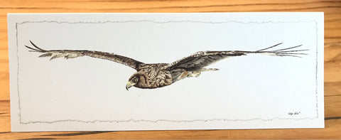 "Greeting Card ""Harrier Hawk"""