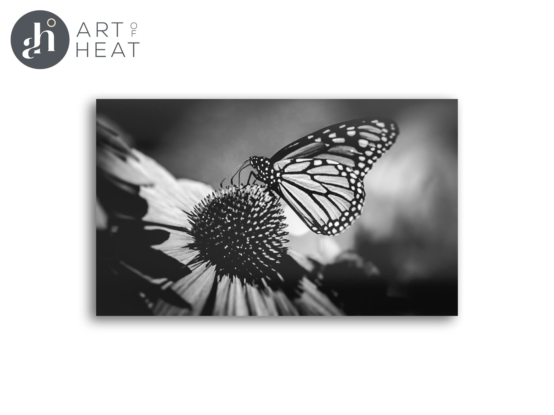 Limited Edition Monarch Panels - Price Includes Packaging & Delivery