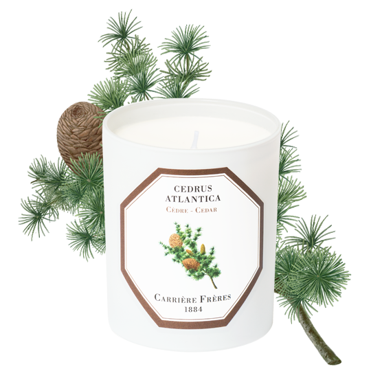 Cedar- Carriere Freres Candle