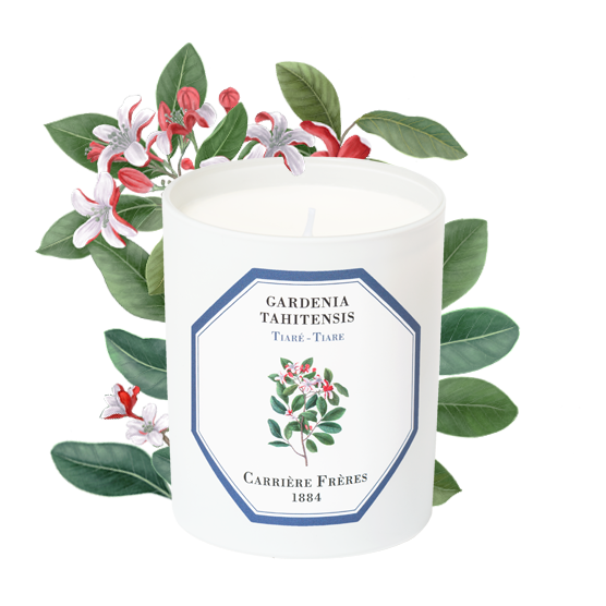Tiare- Carriere Frères Candle