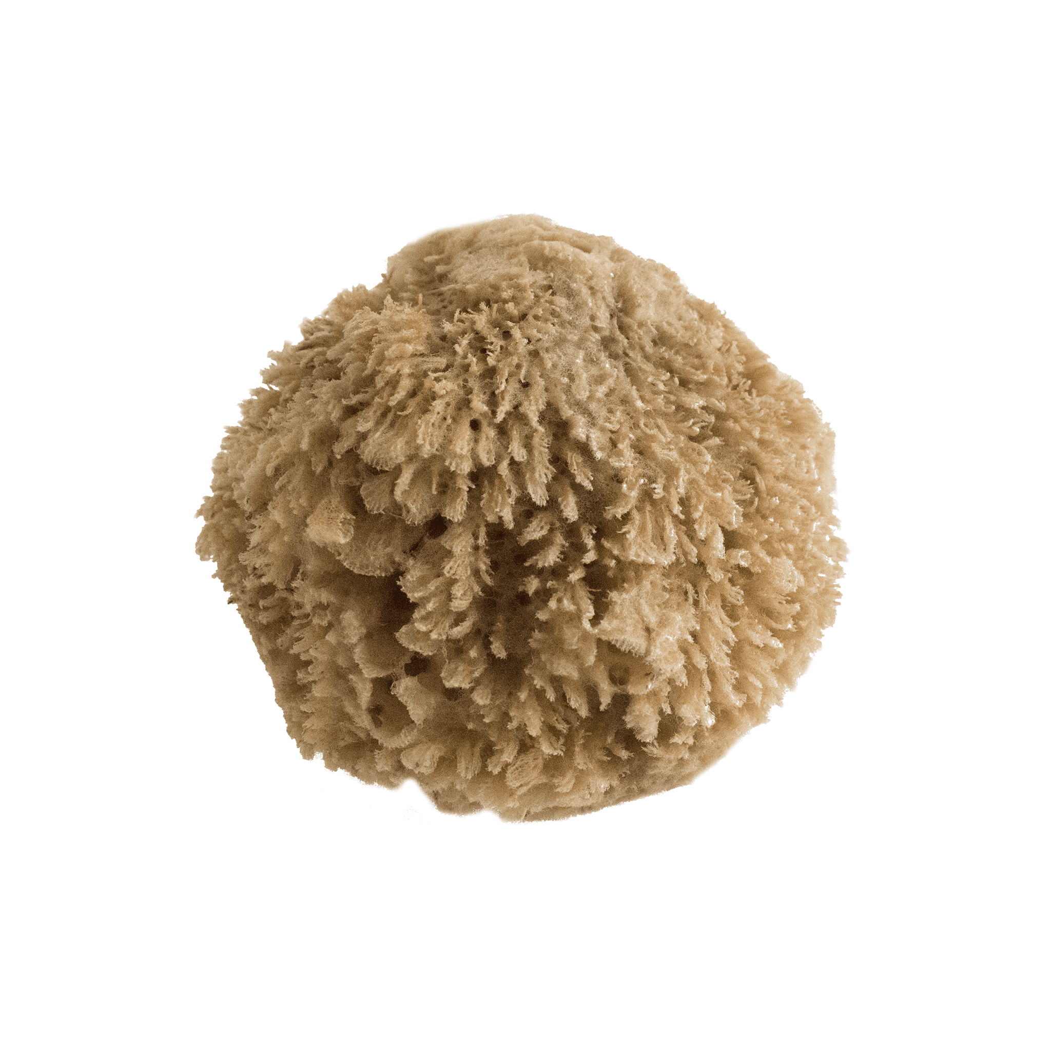 Grass Natural Sea Sponge - LIMITED EDITION - Eco Kindly
