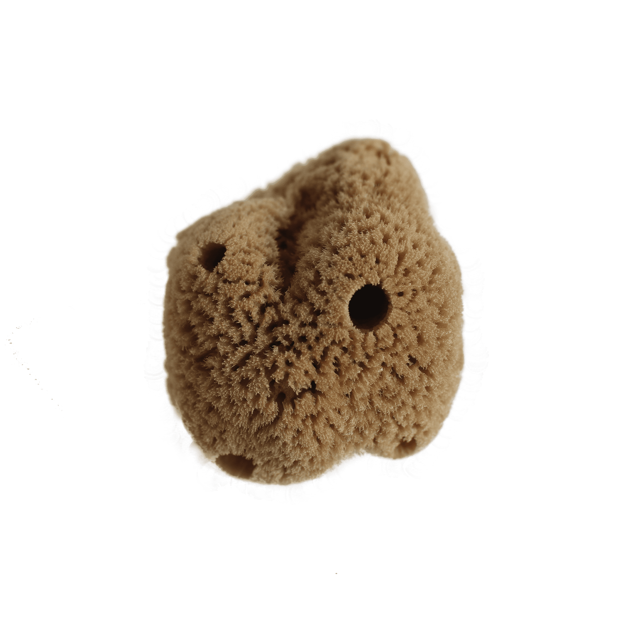 Silk Natural Sea Sponge - LIMITED EDITION - Eco Kindly
