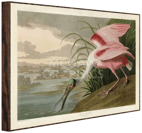 Roseate Spoonbill (Framed) -  John James Audubon - McGaw Graphics