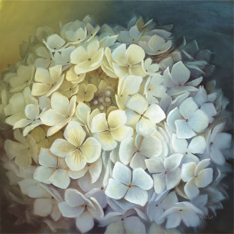 Hydrangea Portrait -  Lisa Audit - McGaw Graphics