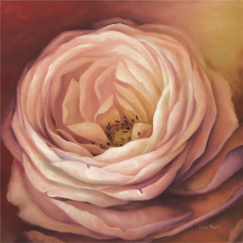 Rose Portrait -  Lisa Audit - McGaw Graphics