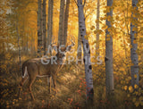 Greg Alexander - Whitetail in Aspens