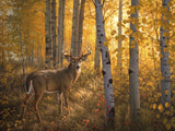 Whitetail in Aspens -  Greg Alexander - McGaw Graphics