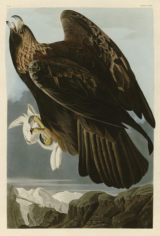 John James Audubon - Golden Eagle