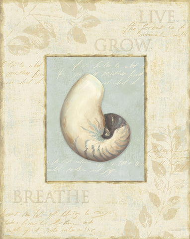 Soothing Words Shells II -  Lisa Audit - McGaw Graphics