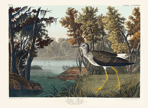 Yellow Shank -  John James Audubon - McGaw Graphics