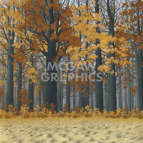 Autumn Wood -  Timothy Arzt - McGaw Graphics
