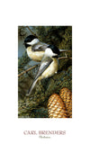 Chickadees -  Carl Brenders - McGaw Graphics