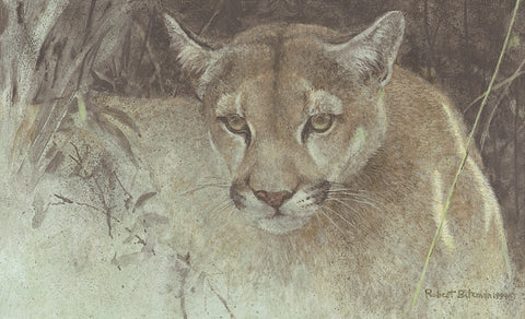 Robert Bateman - Tropical Cougar