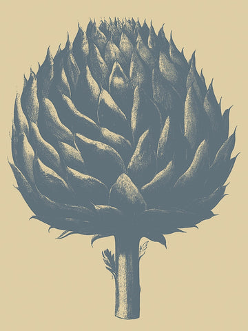 Artichoke 1 -  Botanical Series - McGaw Graphics