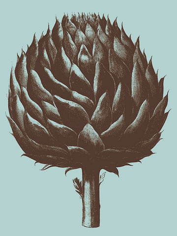 Artichoke 18 -  Botanical Series - McGaw Graphics