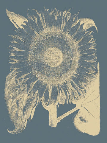 Botanical Series - Sunflower 2