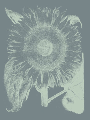 Botanical Series - Sunflower 7