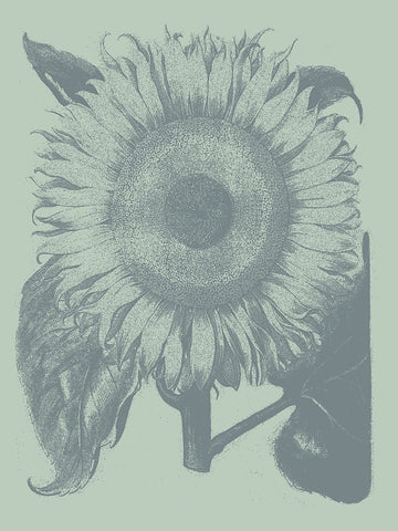 Botanical Series - Sunflower 8