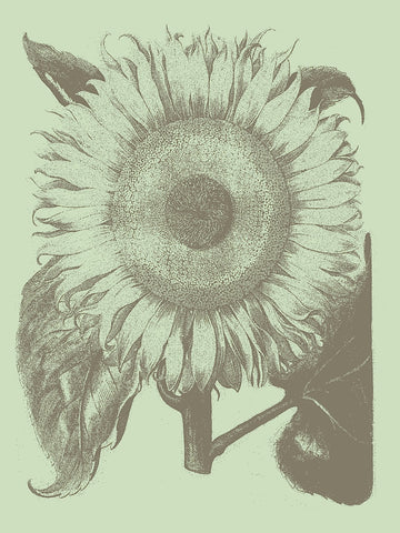 Botanical Series - Sunflower 11