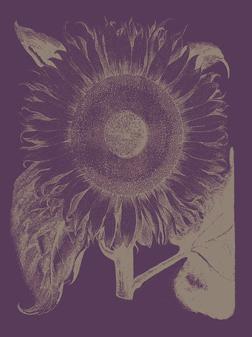 Sunflower 13 -  Botanical Series - McGaw Graphics
