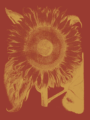 Sunflower 16 -  Botanical Series - McGaw Graphics