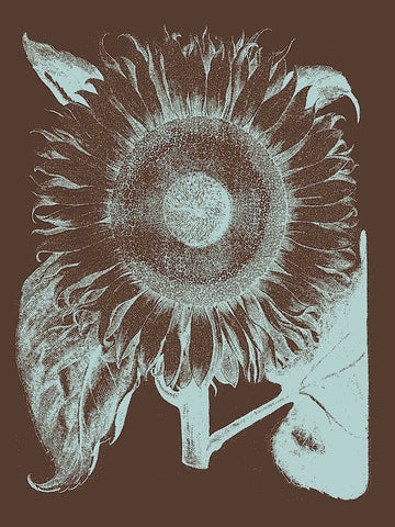 Botanical Series - Sunflower 17