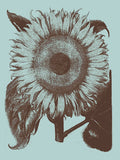 Sunflower 18 -  Botanical Series - McGaw Graphics