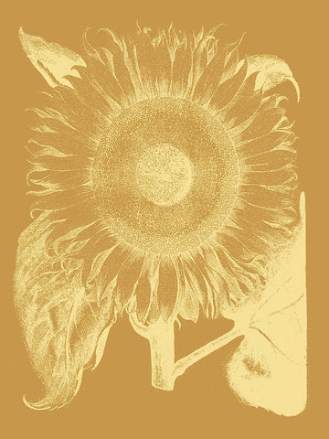 Botanical Series - Sunflower 20