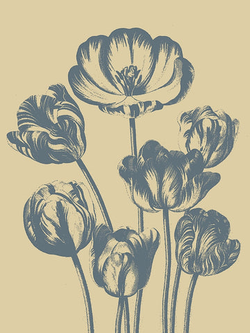 Tulip 1 -  Botanical Series - McGaw Graphics