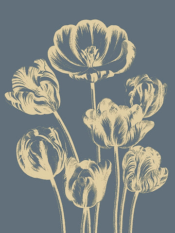 Botanical Series - Tulip 2
