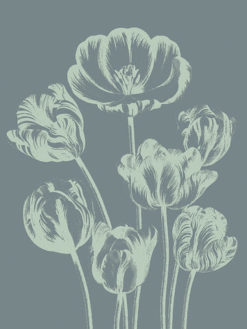 Tulip 7 -  Botanical Series - McGaw Graphics