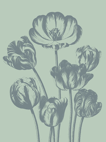 Tulip 8 -  Botanical Series - McGaw Graphics