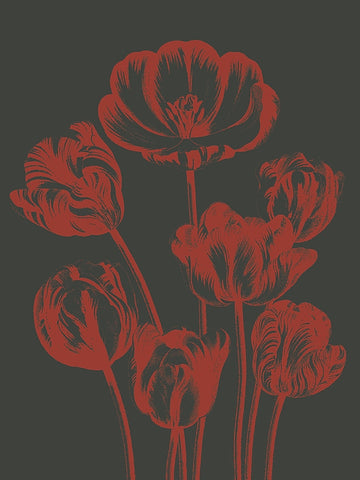 Tulip 10 -  Botanical Series - McGaw Graphics