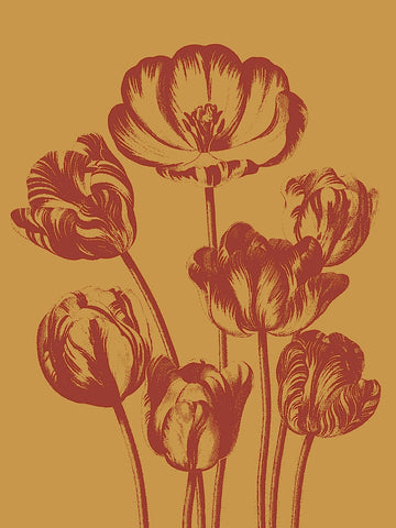 Tulip 15 -  Botanical Series - McGaw Graphics