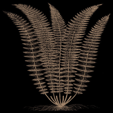 Fern (on black) -  Botanical Series - McGaw Graphics