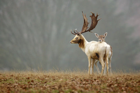 Fallow Love -  Mark Bridger - McGaw Graphics