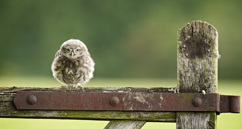 Fuzzball -  Mark Bridger - McGaw Graphics