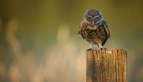 Look Into My Eyes -  Mark Bridger - McGaw Graphics