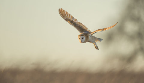 Soft Light -  Mark Bridger - McGaw Graphics