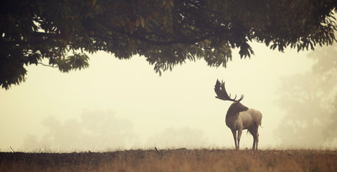 Look Back -  Mark Bridger - McGaw Graphics
