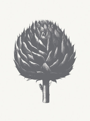 Artichoke (Ivory & Gray) -  Botanical Series - McGaw Graphics