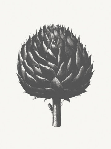 Botanical Series - Artichoke (Ivory & Ink )