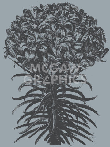 Lilies (Slate & Ink) -  Botanical Series - McGaw Graphics