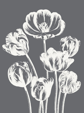 Botanical Series - Tulip (Gray & Ivory)