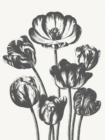 Tulips (Ivory & Ink) -  Botanical Series - McGaw Graphics