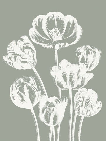 Tulips (Sage & Ivory) -  Botanical Series - McGaw Graphics