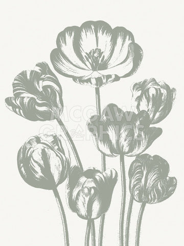 Tulips (Ivory & Sage) -  Botanical Series - McGaw Graphics